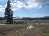 Uitzicht toendra-achtige hoogvlakte op Tioga pass