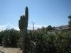 Cactus bij Palm Springs