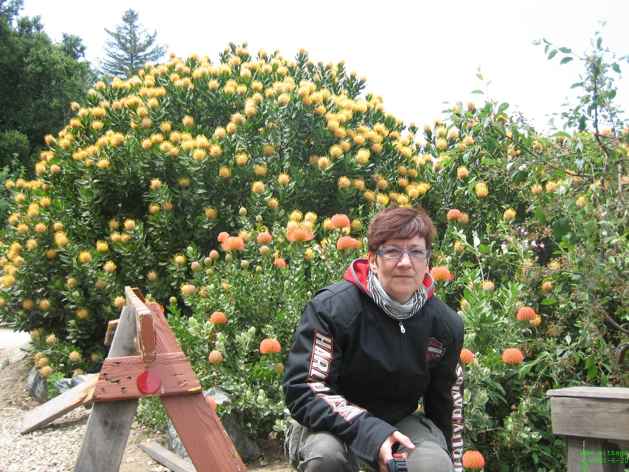 Annie bij een giga grote bloeiende vetplant