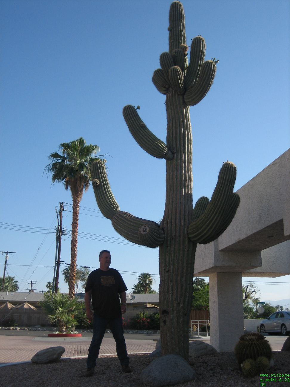 Hotel cactus in palm springs