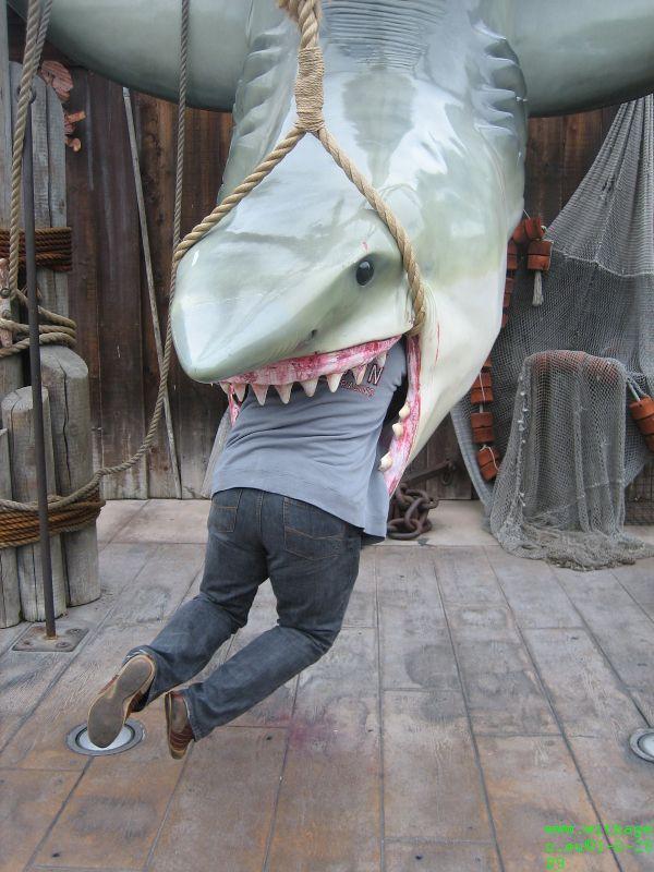 Wim Shark bitten